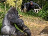 凯南-鲁兹冲着猩猩做出一系列搞笑动作