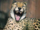 卖萌加搞笑 摄影师抓拍动物瞬间表情