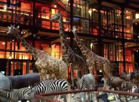 哈曼Martin为法国国家自然历史博物馆提供全新照明解决方案