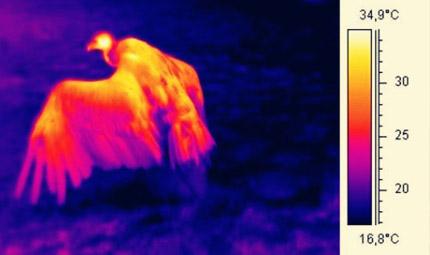 视频监控热成像技术在民用领域的应用
