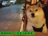單身狗,求約