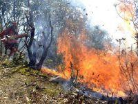森林防火刻不容缓