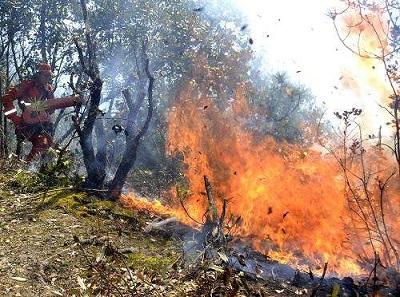 森林防火刻不容緩