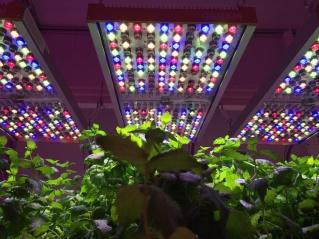 欧司朗推出园艺研究专用照明系统Phytofy RL
